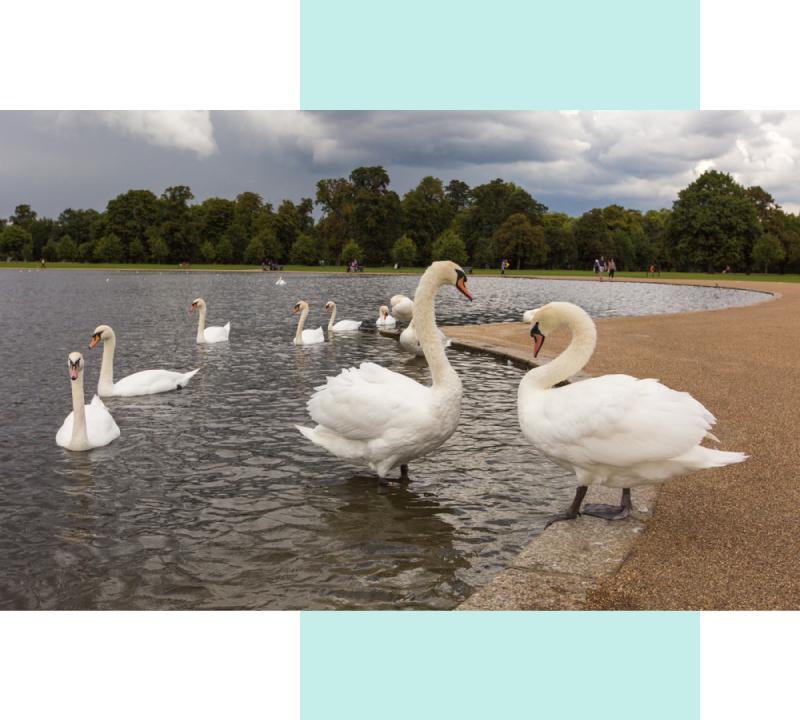 Любителям фото 15 найкращих місць для селфі в Лондоні 9 1  / Crazyllama / Crazy Llama / Крейзи Лама / Крейзі Лама